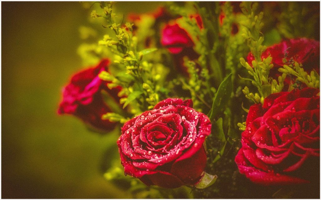 Buds-And-Roses-Fresh-Flowers-buds-and-roses-fresh-flowers-1080p-buds-and-rose-wallpaper-wp3803494