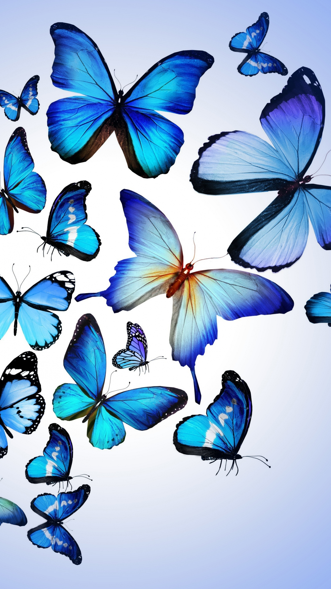 Butterfly-Colorful-Blue-Drawing-Art-Beautiful-iPhone-wallpaper-wp3803522