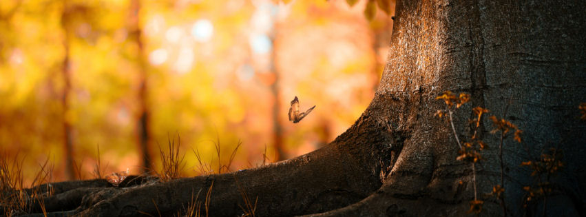 Butterfly-wood-facebook-cover-wallpaper-wp3603770