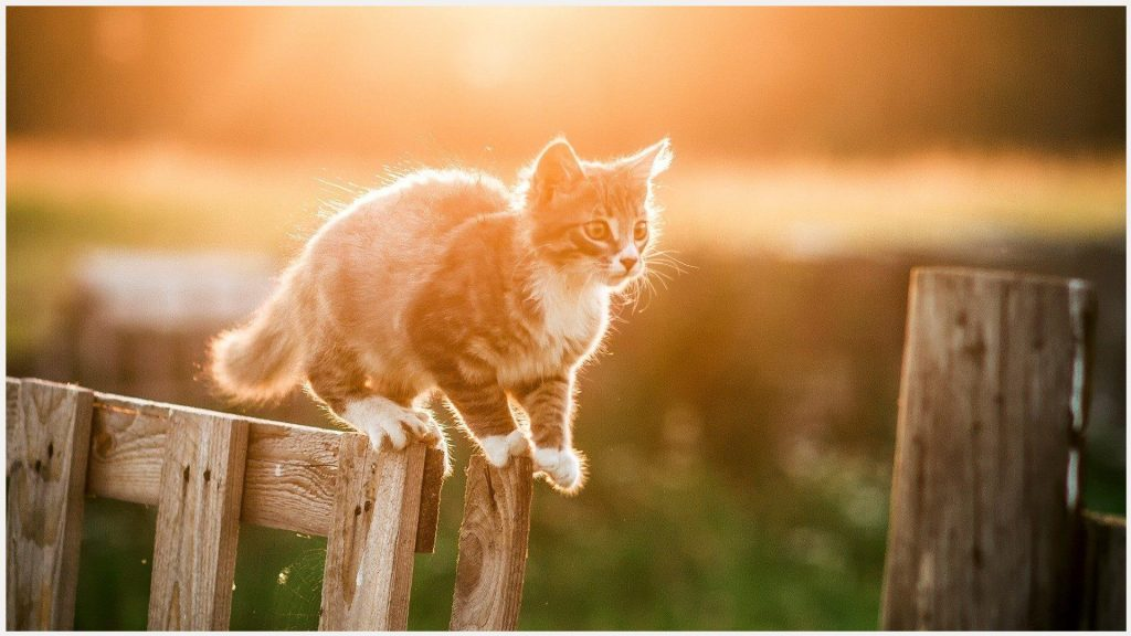 Cat-Fence-HD-cat-fence-hd-1080p-cat-fence-hd-desktop-cat-fence-hd-wallpaper-wp3603949
