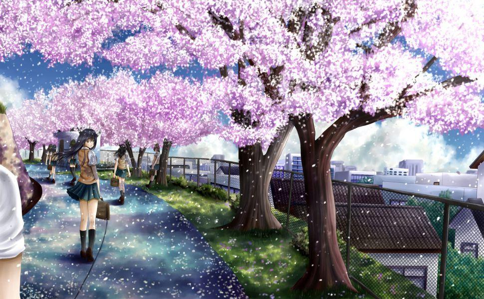 Cherry-blossom-HD-wallpaper-wp3604030