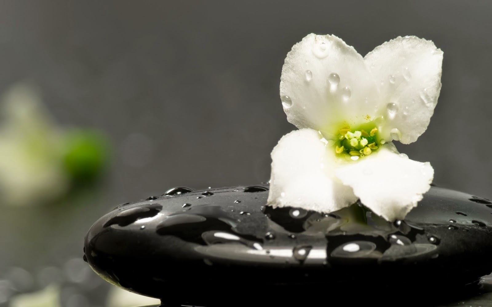 Chinese-Zen-meditation-pictures-1080p-Full-HD-widescreen-PIXHOME-wallpaper-wpc9203554