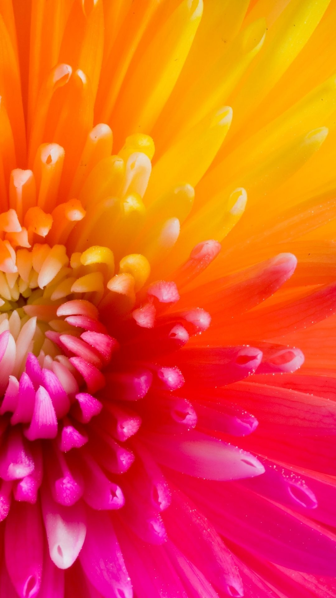 Colorful-Tropical-Flowers-iPhone-Plus-Flowers-iPhone-Plus-wallpaper-wpc9003691