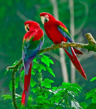 Cool-Parrots-Paradise-for-1080x1920-wallpaper-wpc9003800