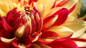 Courage-and-Determination-Today-I-Breathe-in-the-Precious-Air-and-receive-the-gift-of-Oxyge-wallpaper-wp3804109