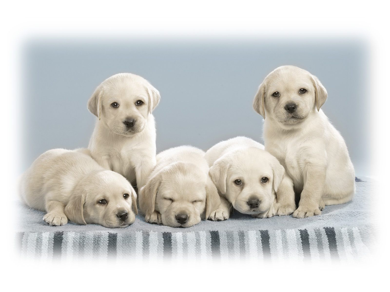 Cute-Dogs-And-Puppies-wallpaper-wpc580180