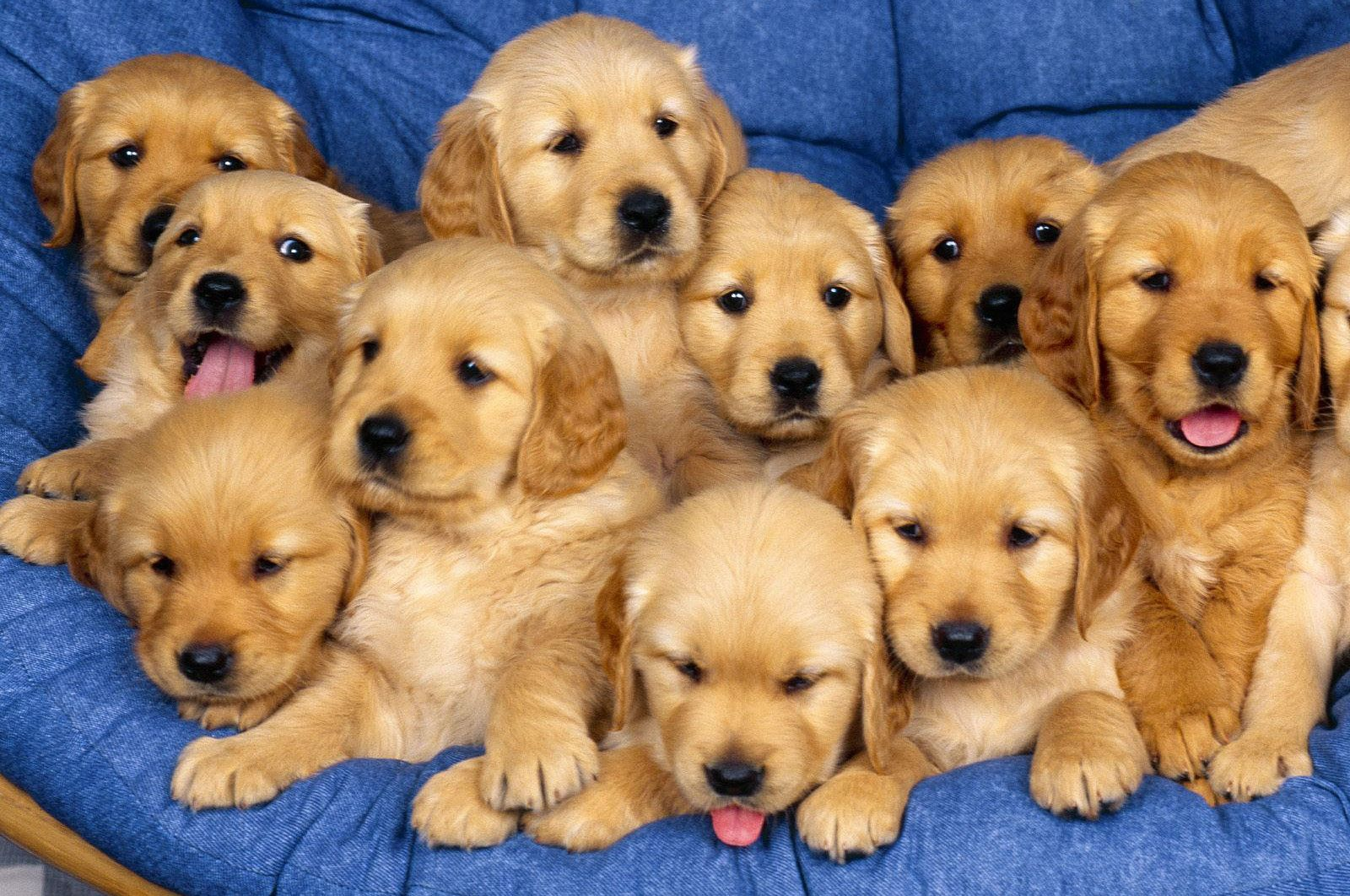 Cute-Dogs-And-Puppies-wallpaper-wpc5803832
