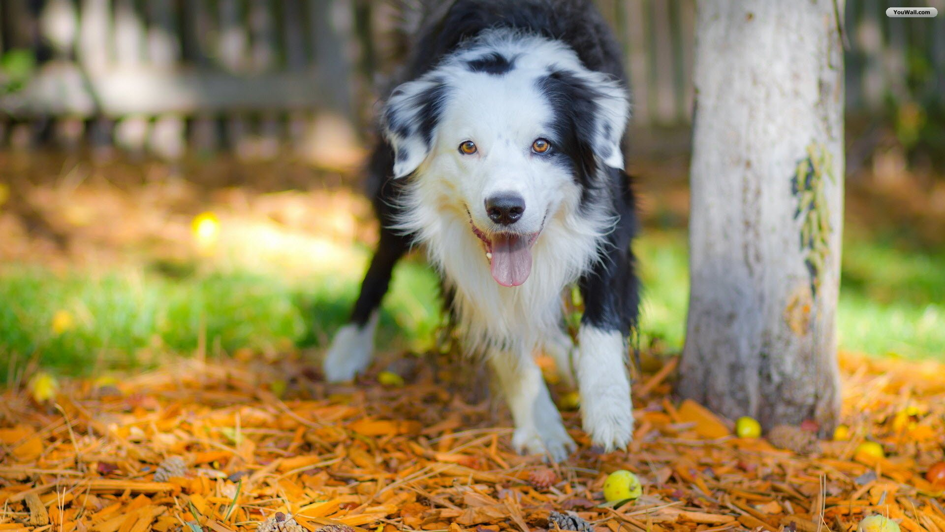 Cute-dog-for-free-download-about-wallpaper-wpc9003922