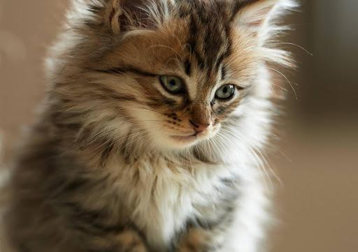Cute-kitten-gives-kitten-hd-for-cute-cat-kittens-this-kittens-like-pu-wallpaper-wpc9003930