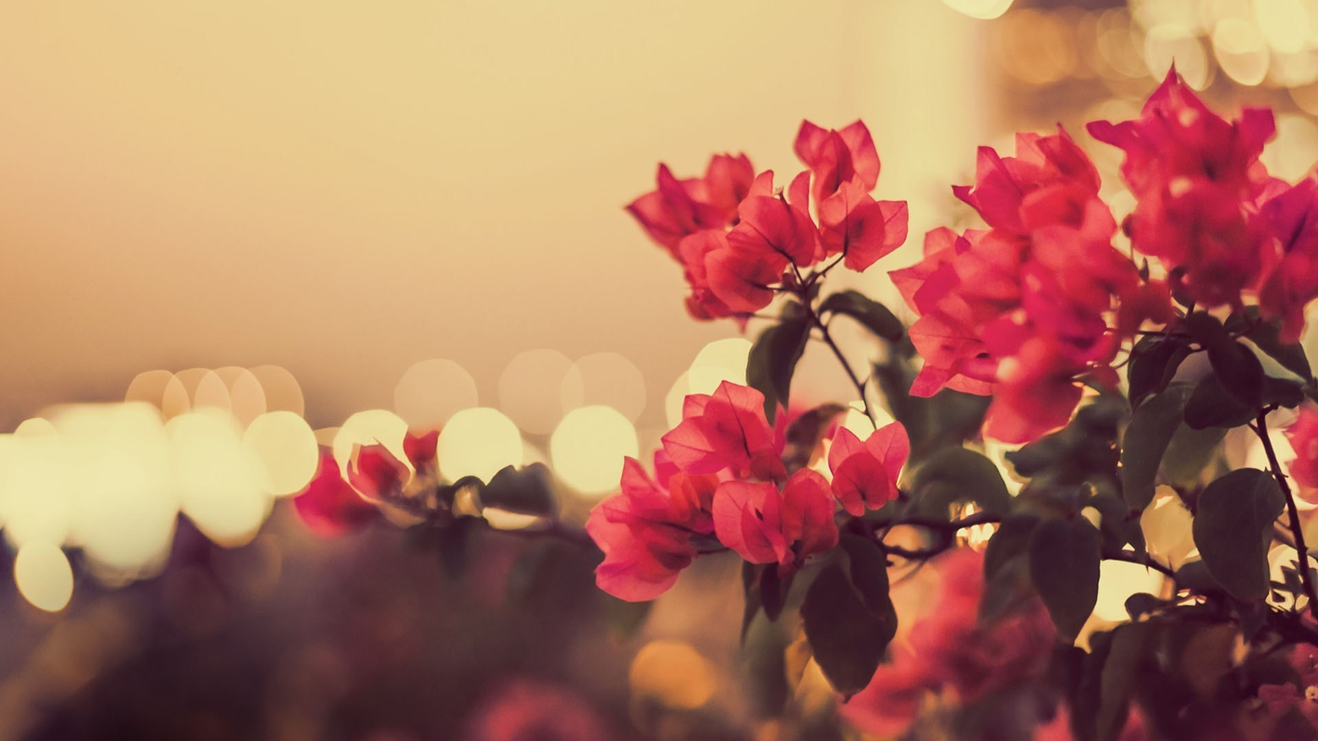 DOWNLOAD-Vintage-Photography-FULL-SIZE-wallpaper-wpc5804386