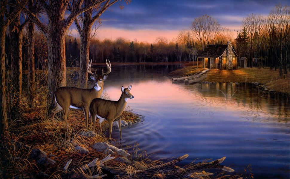 Deer-by-the-river-HD-wallpaper-wpc5803993