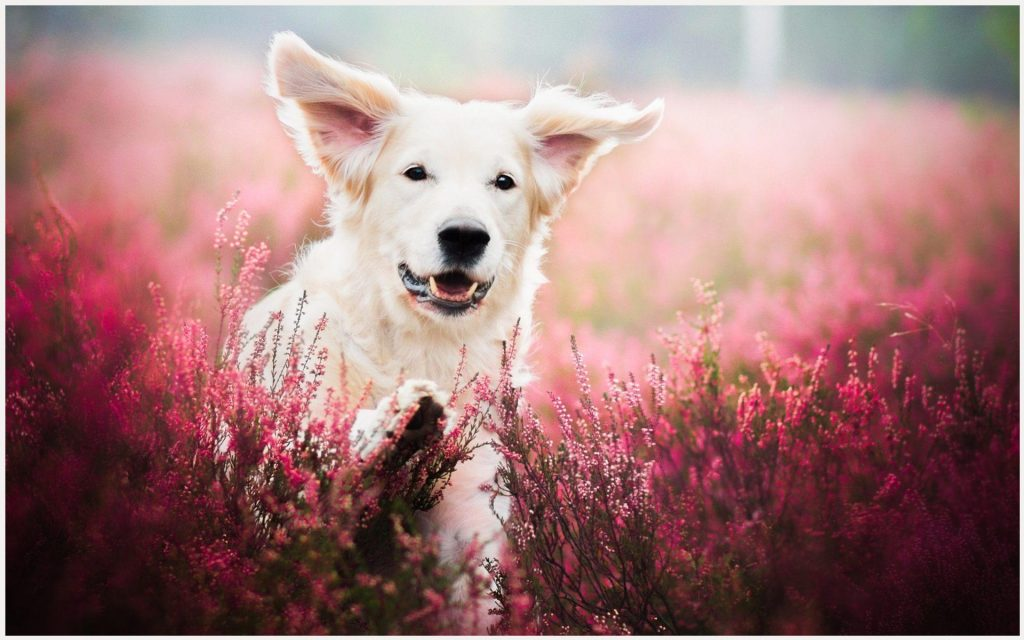 Dog-Face-In-Flower-Field-dog-face-in-flower-field-1080p-dog-face-in-flower-fi-wallpaper-wpc5804188