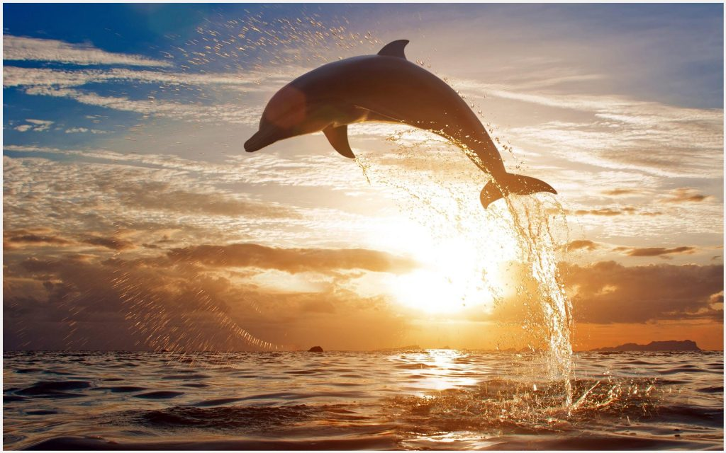 Dolphin-Fish-Water-Splash-dolphin-fish-water-splash-1080p-dolphin-fish-water-wallpaper-wpc9004330
