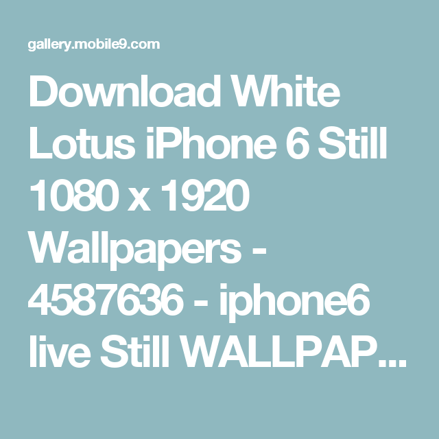 Download-White-Lotus-iPhone-Still-1080-x-1920-iphone-live-Still-wallpaper-wp3605151