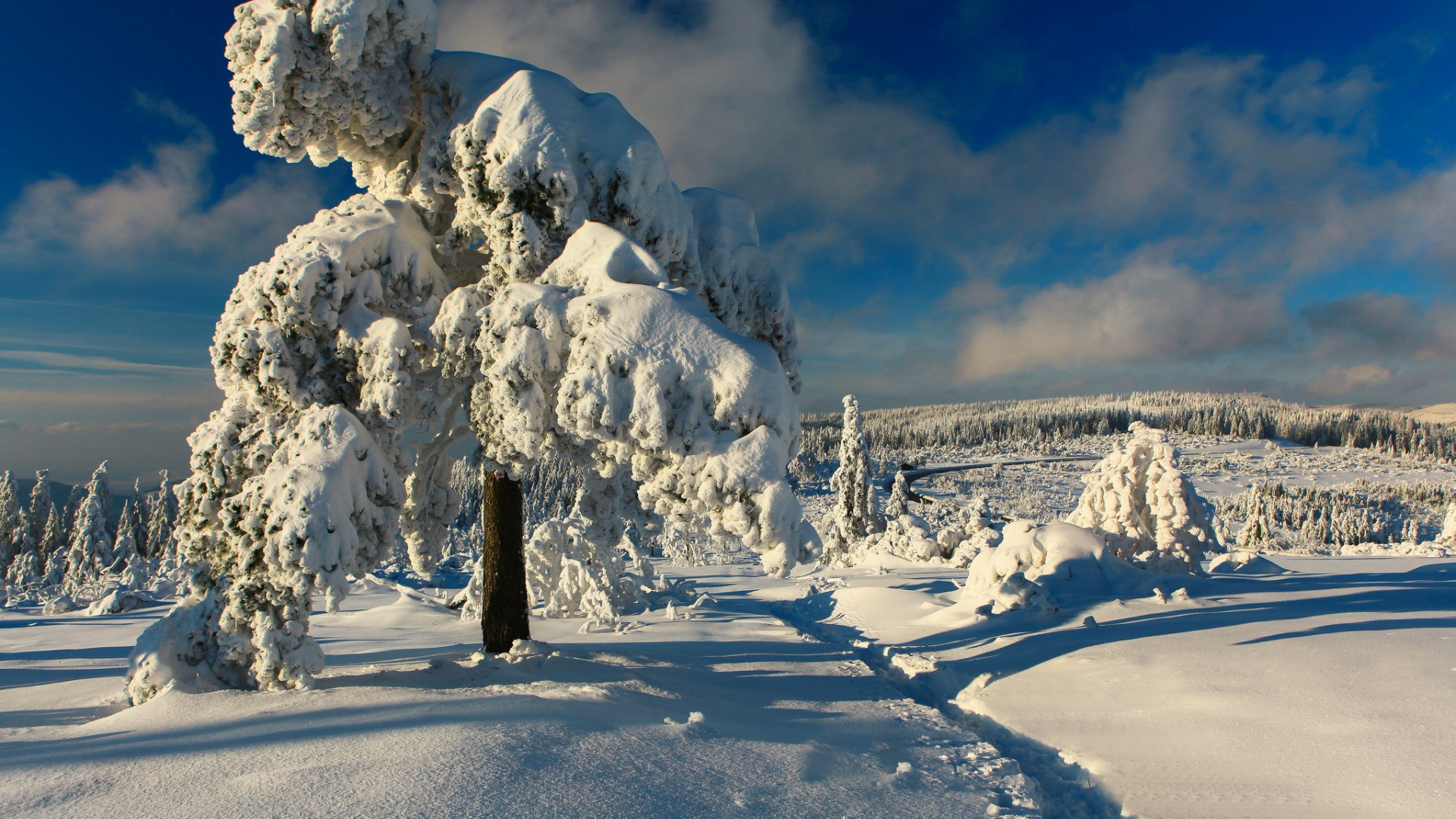 Download-winter-snow-trees-Germany-path-Germany-Black-Forest-The-black-forest-sect-wallpaper-wp3605139