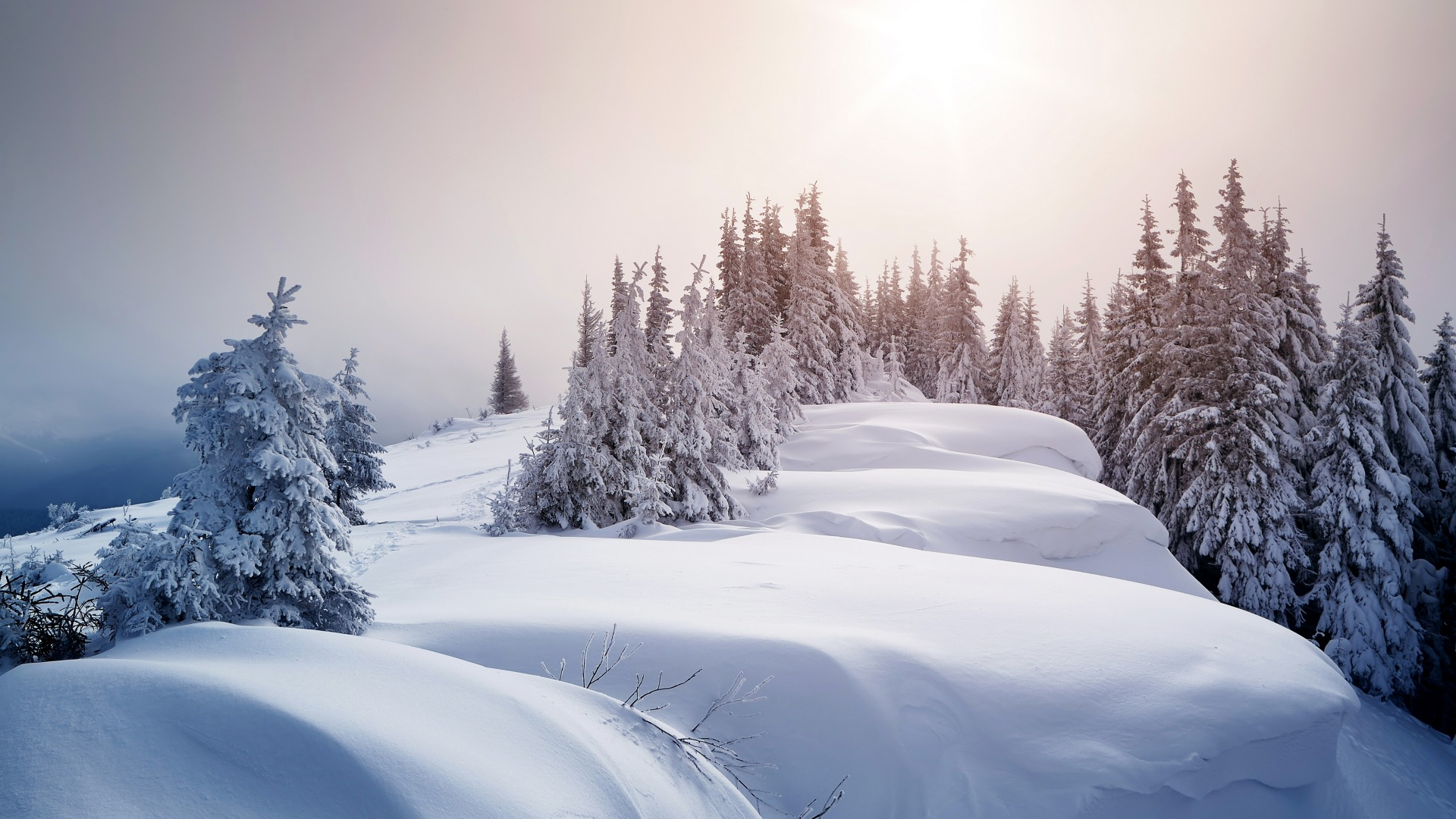 Download-winter-snow-trees-ate-the-snow-section-Resolution-1920x1080-wallpaper-wp3605138