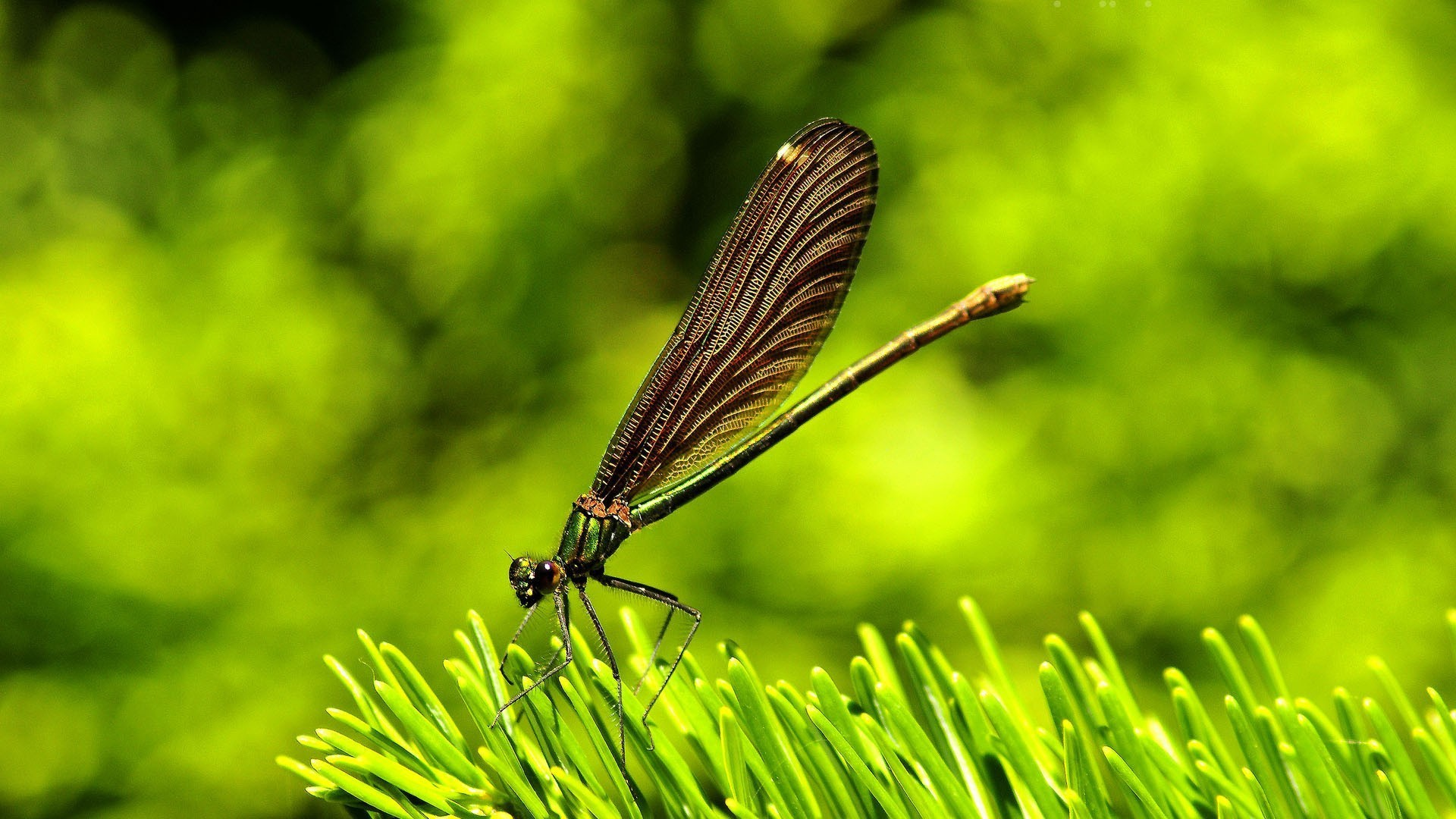 Dragonflies-green-insects-nature-1920x1080-green-insects-nature-via-www-all-in-wallpaper-wp3804891