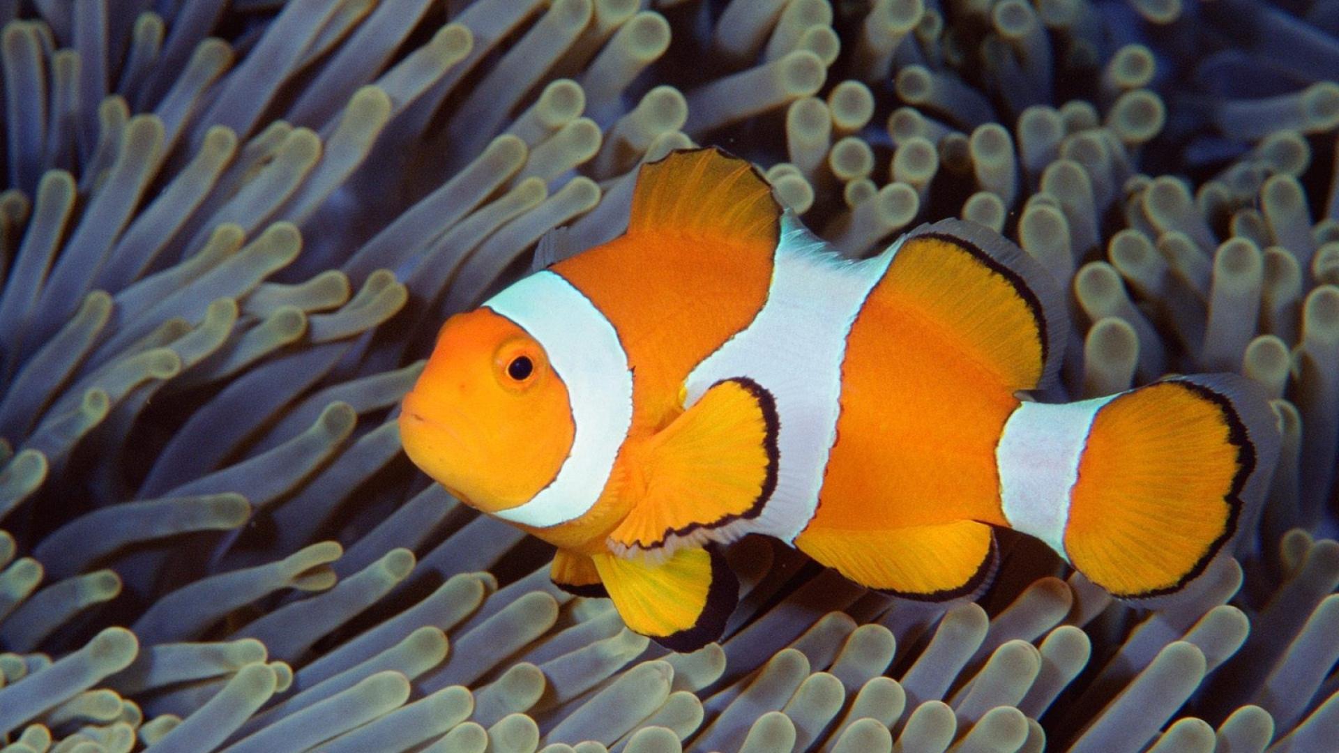 Fish-bali-indonesia-underwater-sea-ocean-1920x1080-Need-iPhone-S-Plus-Background-wallpaper-wp3605582