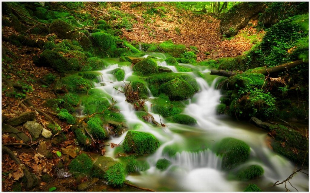 Forest-River-Water-Stream-Scenery-forest-river-water-stream-scenery-1080p-for-wallpaper-wpc9005096