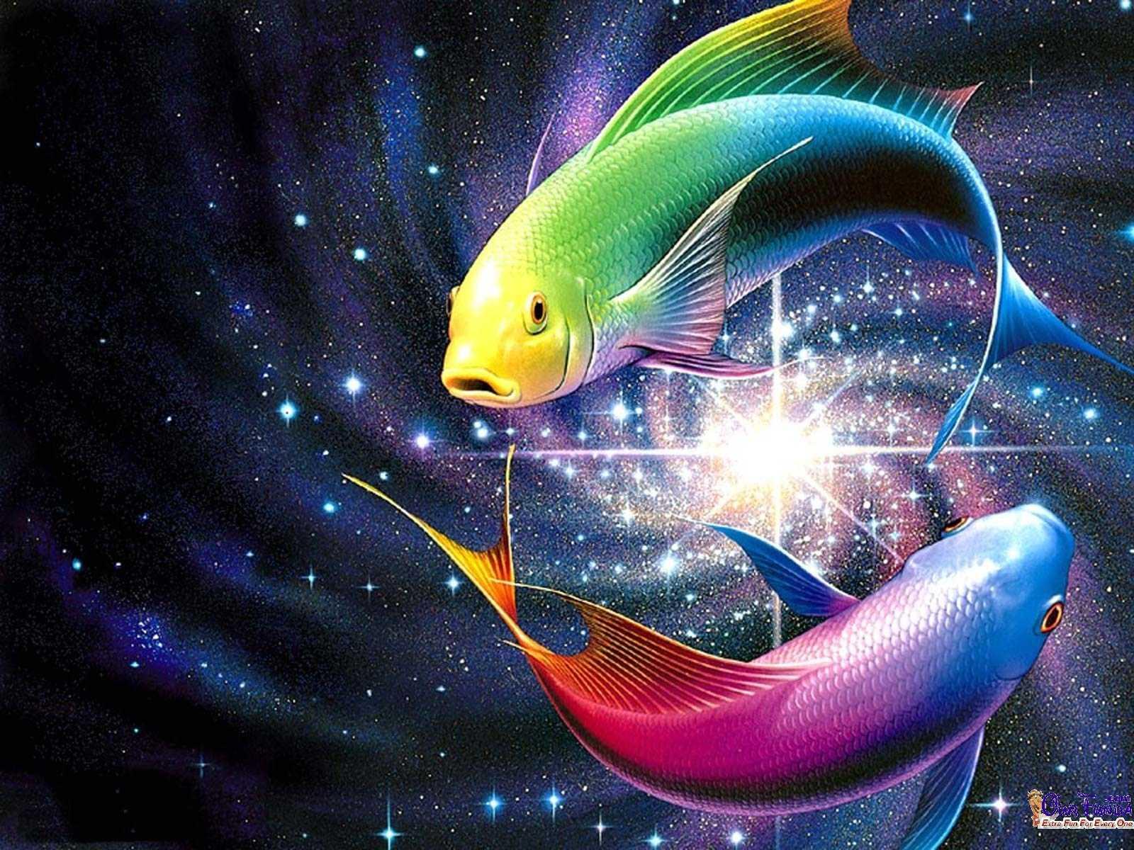 Free-Slanting-Fish-HD-wallpaper-wpc5805138