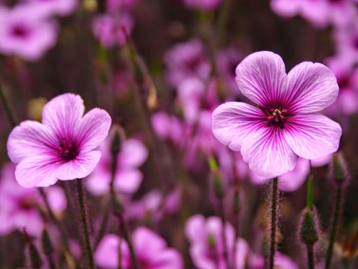 Fresh-Flowers-HD-1080p-FreshFlowersHD1080p-FreshFlowers-Flowers-wallpap-wallpaper-wpc5805177