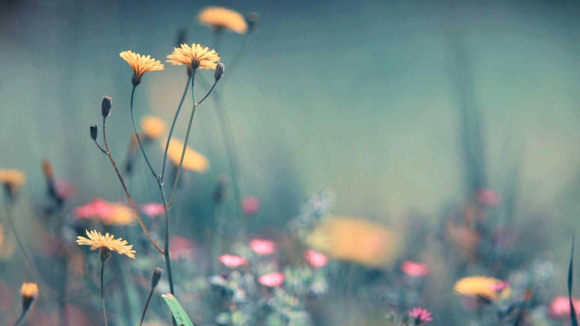 Full-Desktop-Spring-Flowers-wallpaper-wpc5805206