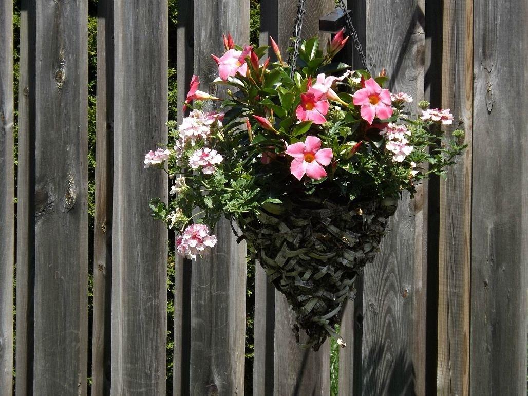 Garden-Petals-Blooms-Flowers-Debs-Pink-3d-Flower-Rose-Flowers-Garden-Petals-Blooms-Flowe-wallpaper-wp3606094