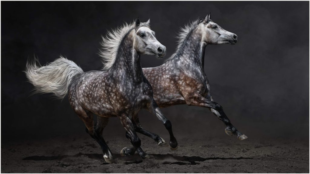 Gray-Horse-Galloping-UHD-gray-horse-galloping-uhd-1080p-gray-horse-galloping-wallpaper-wp3806050