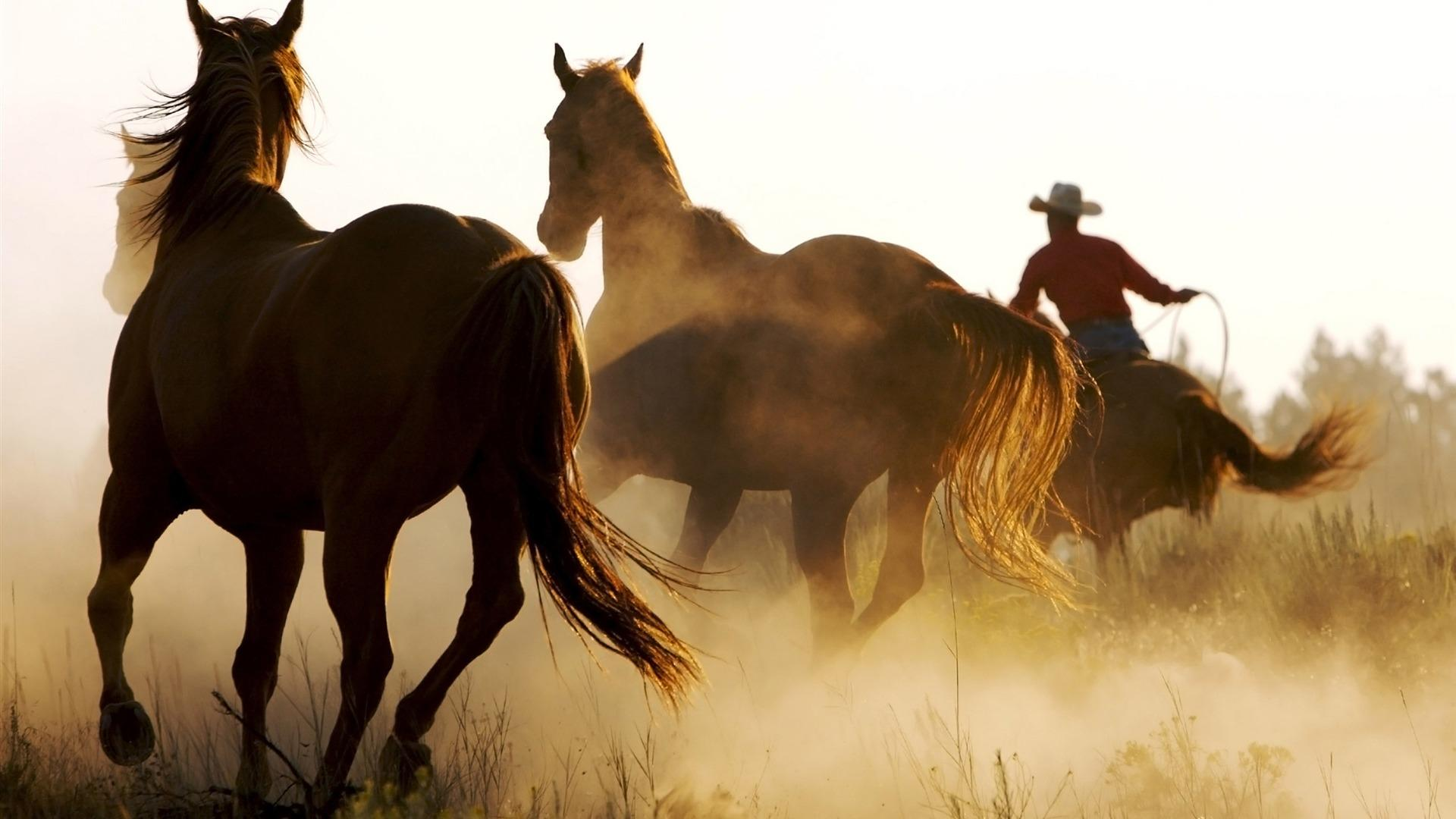 Hot-Rodeo-Cowboys-Horse-desktop-from-Arabian-to-wild-Mustangs-all-in-HD-wallpaper-wp3806642