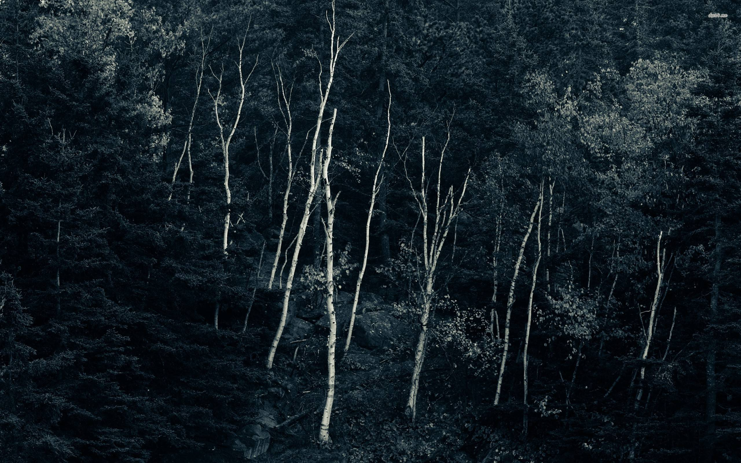 InterfaceLIFT-Into-The-Woods-wallpaper-wp3607383