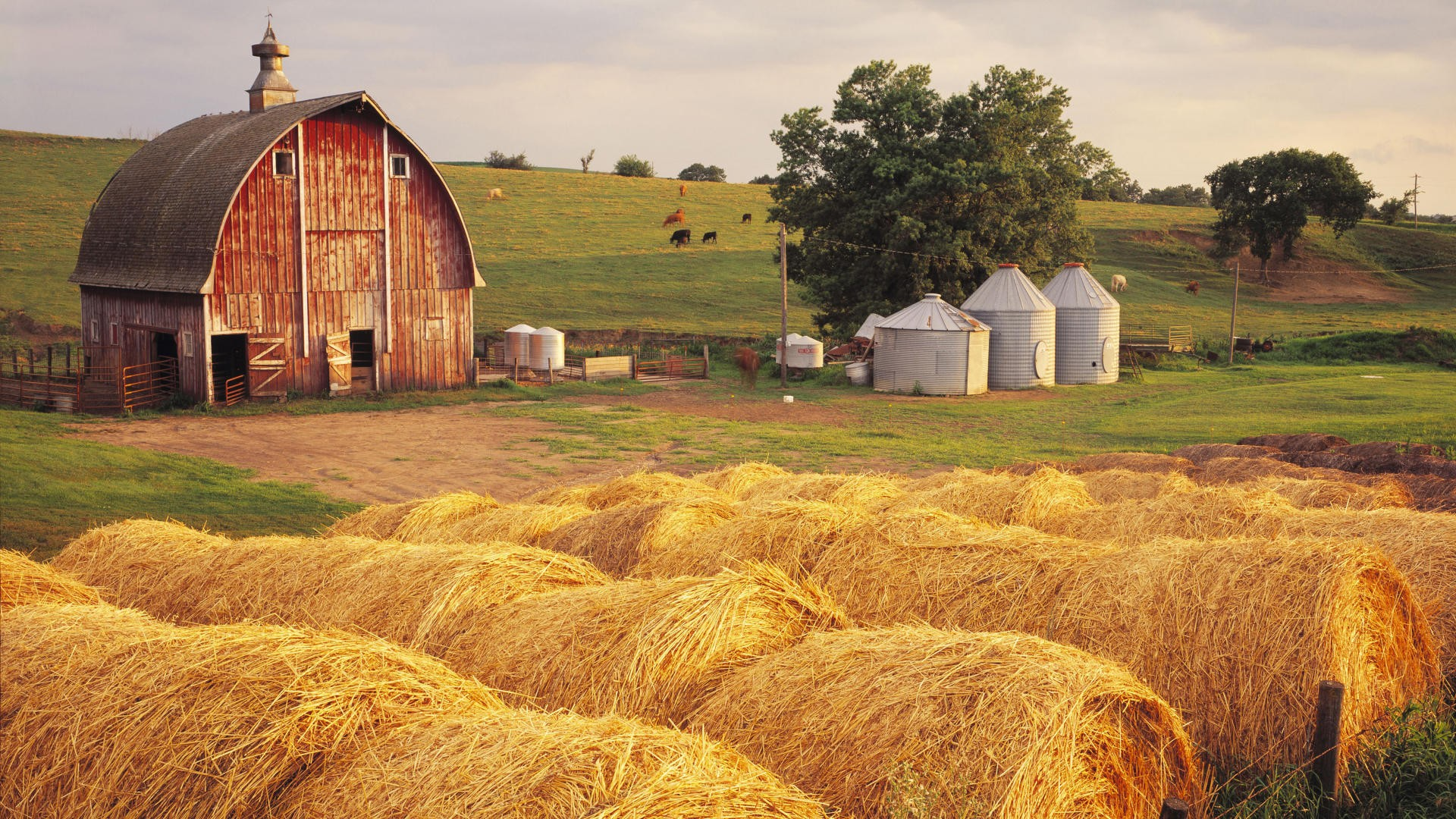 Life-On-the-Farm-Country-Farm-Computer-Desktop-Backgrounds-1920x1080-ID-wallpaper-wp3807659