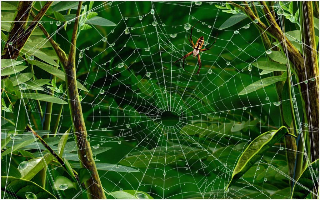 Spider-Web-Green-Leaves-Water-Drops-spider-web-green-leaves-water-drops-1080p-wallpaper-wpc9009354