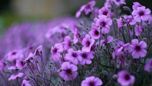 ungu kertas dinding tumblr