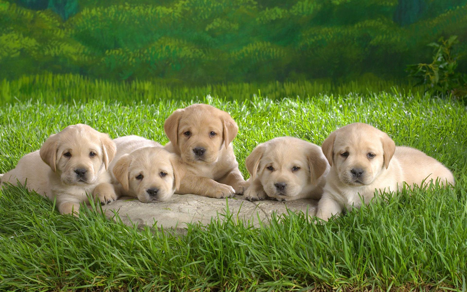 animals-Download-free-animals-Cute-Baby-Animals-wallpaper-wpc5802130