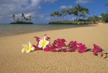 beach-sand-flowers-hawaii-palm-trees-oahu-pink-flowers-plumeria-1920x1080-Art-HD-wallpaper-wp3802913