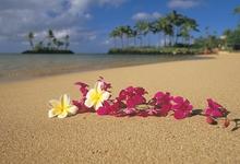 beach-sand-flowers-hawaii-palm-trees-oahu-pink-flowers-plumeria-1920x1080-Art-HD-wallpaper-wpc5802595