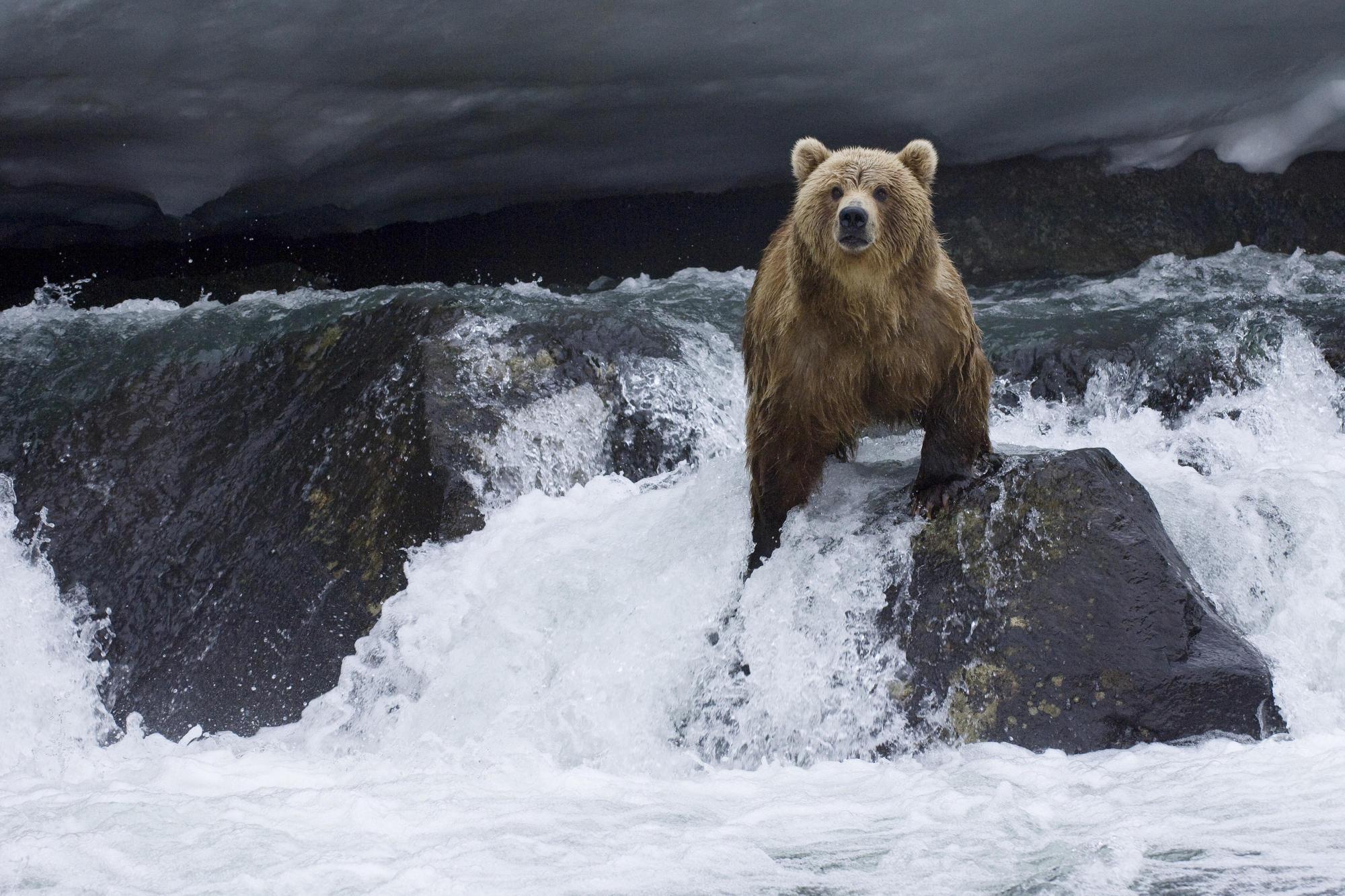 bear-animals-download-images-wallpaper-wp3603062