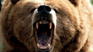 grizzly wallpaper