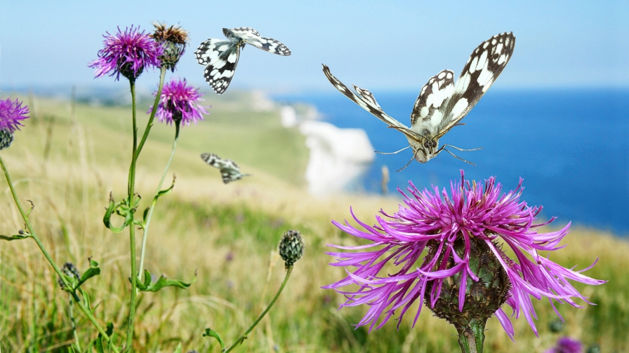 beautiful-butterfly-wind-hd-free-download-wallpaper-wp3802946