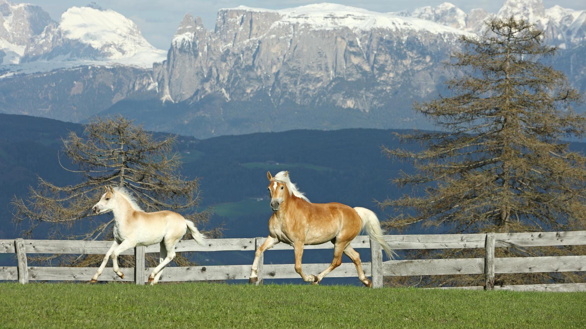 beautiful-horses-1920%C3%971080-wallpaper-wp3603156