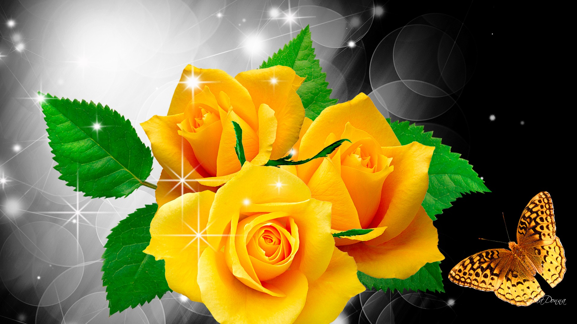 beautiful-rose-flowers-pictures-and-rose-flowers-wallpaper-wpc5802685