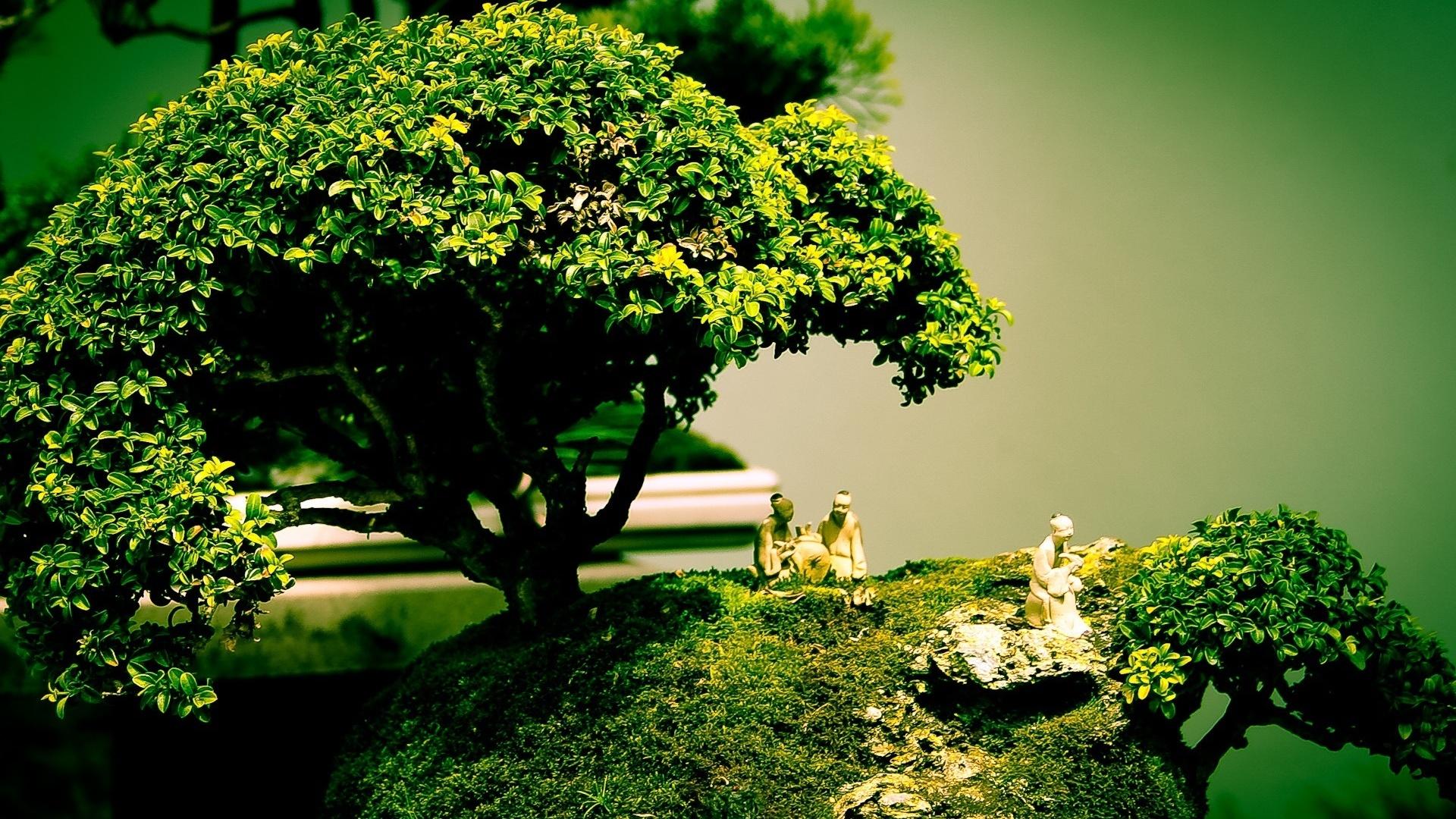 bonsai-tree-art-1920x1080-wallpaper-wp3803386