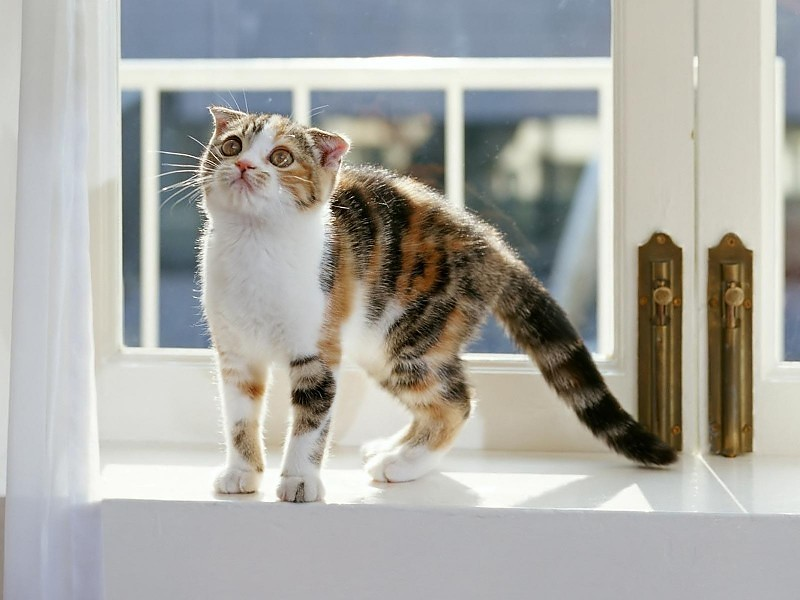 cat-on-window-ledge-%C3%97-wallpaper-wpc9003392