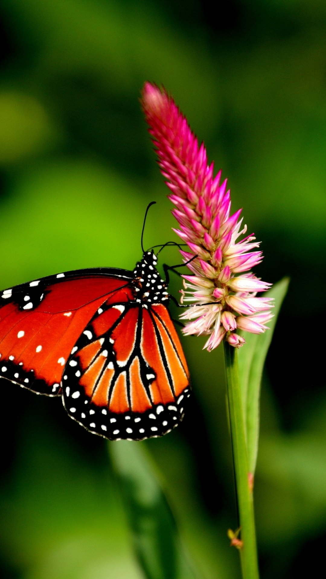 ccefdfaf-nature-images-butterfly-wallpaper-wp3801578