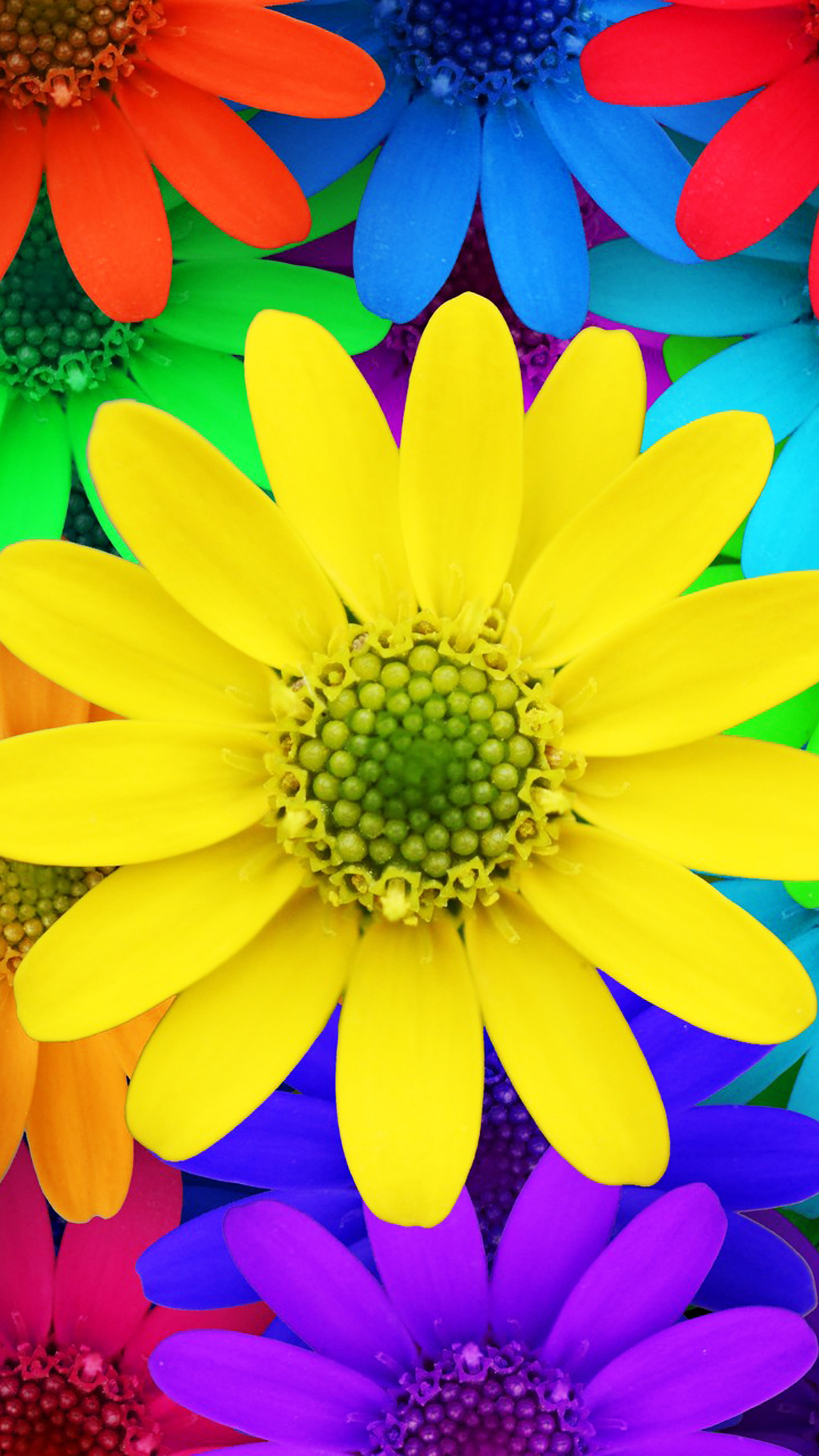 colorful-daisy-flowers-spring-red-yellow-blue-purple-image-1080%C3%971920-wallpaper-wp3803914