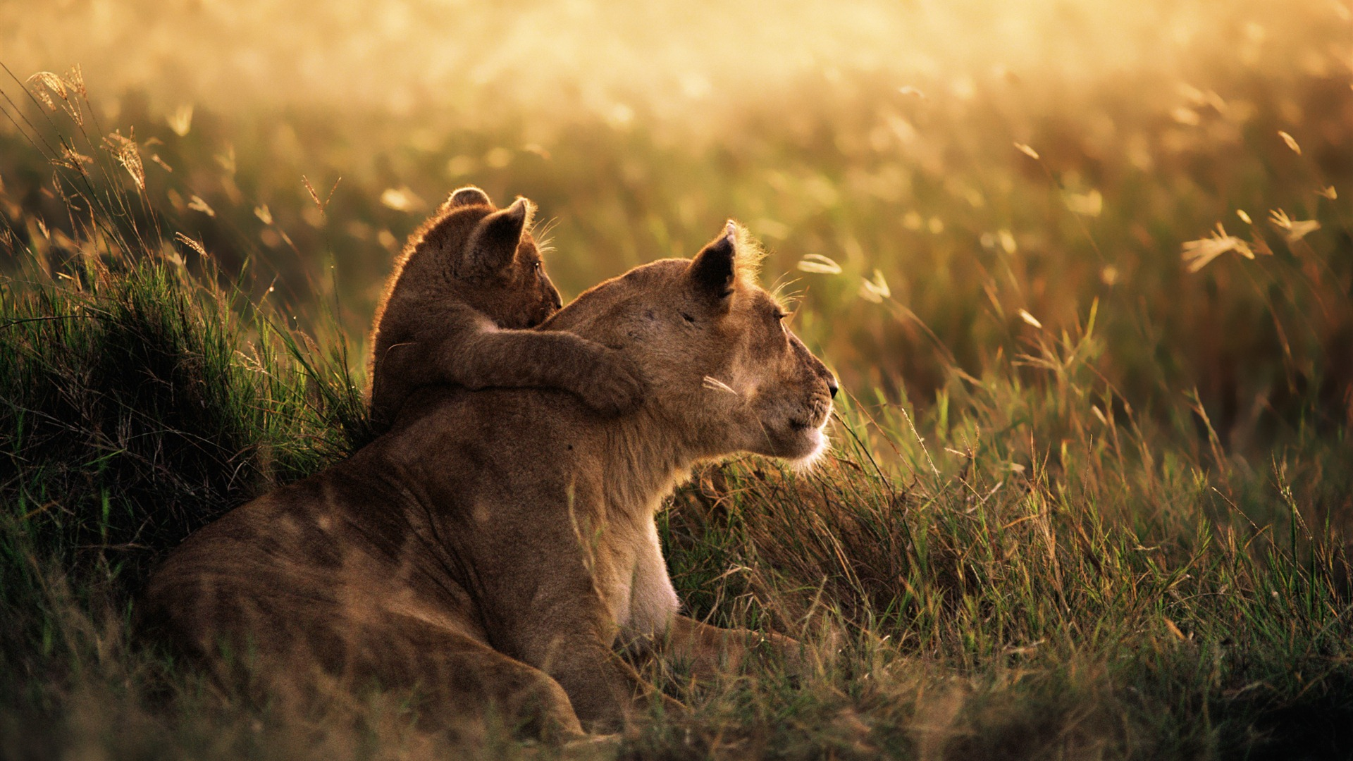 cub-with-her-mom-wallpaper-wpc9003880