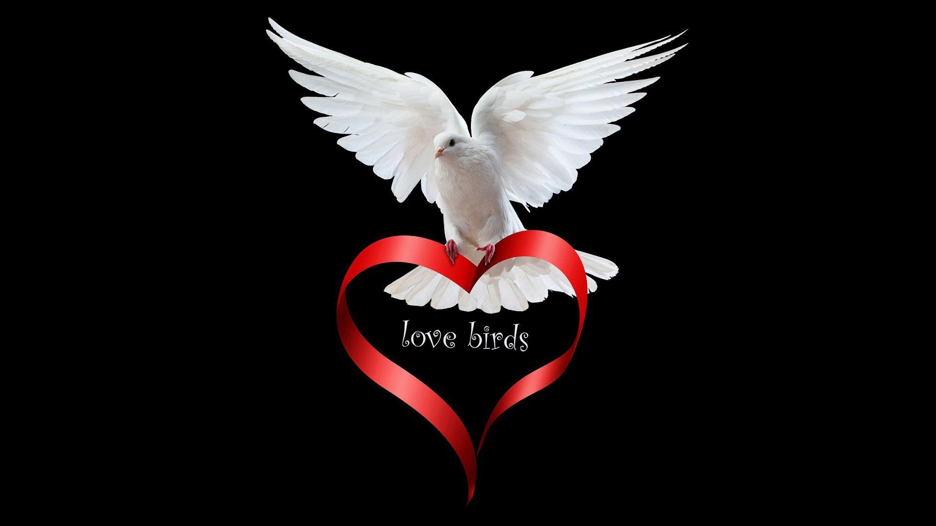cute-love-birds-Odd-wallpaper-wpc5803841