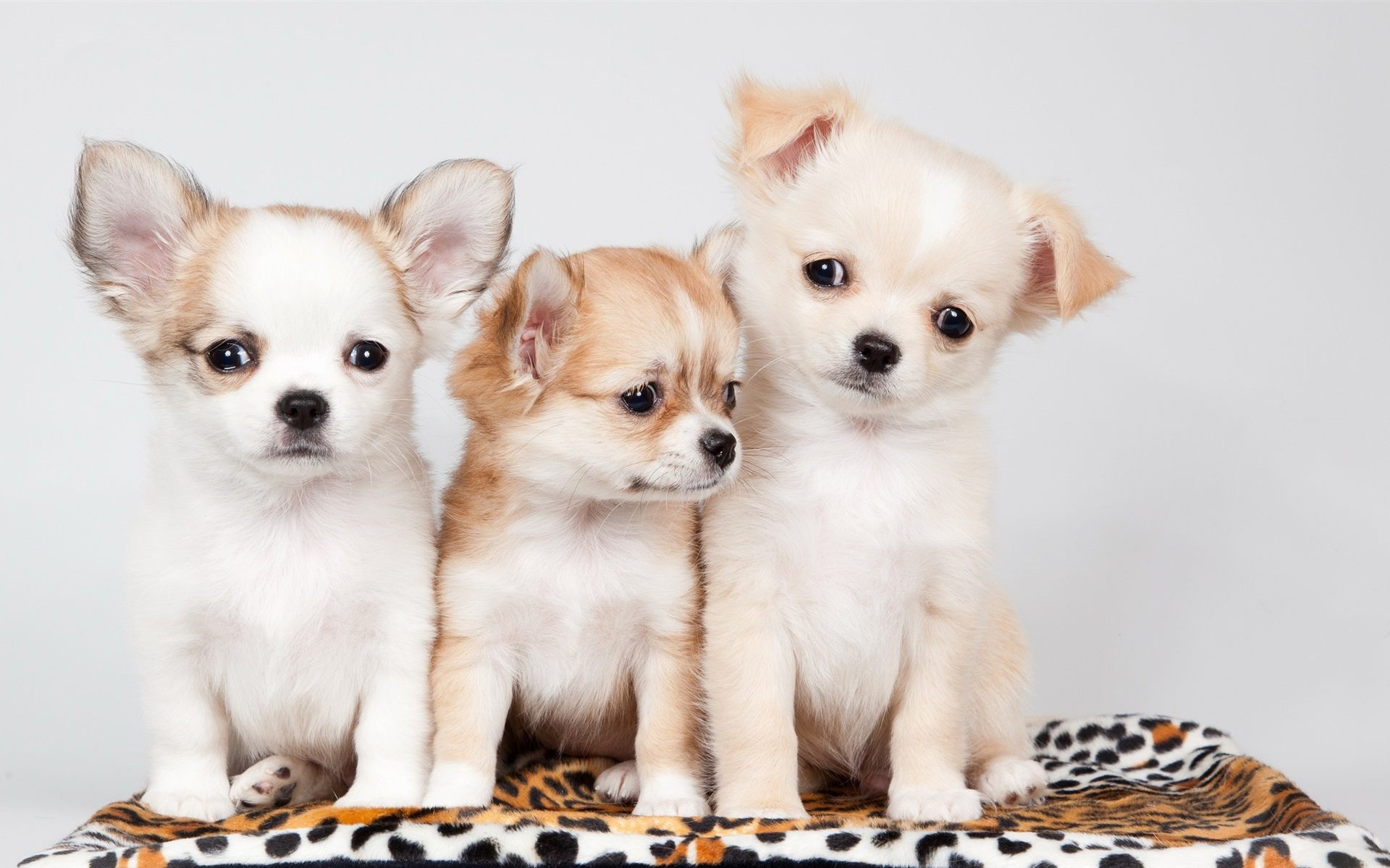 cute-puppies-wallpaper-wpc5803855