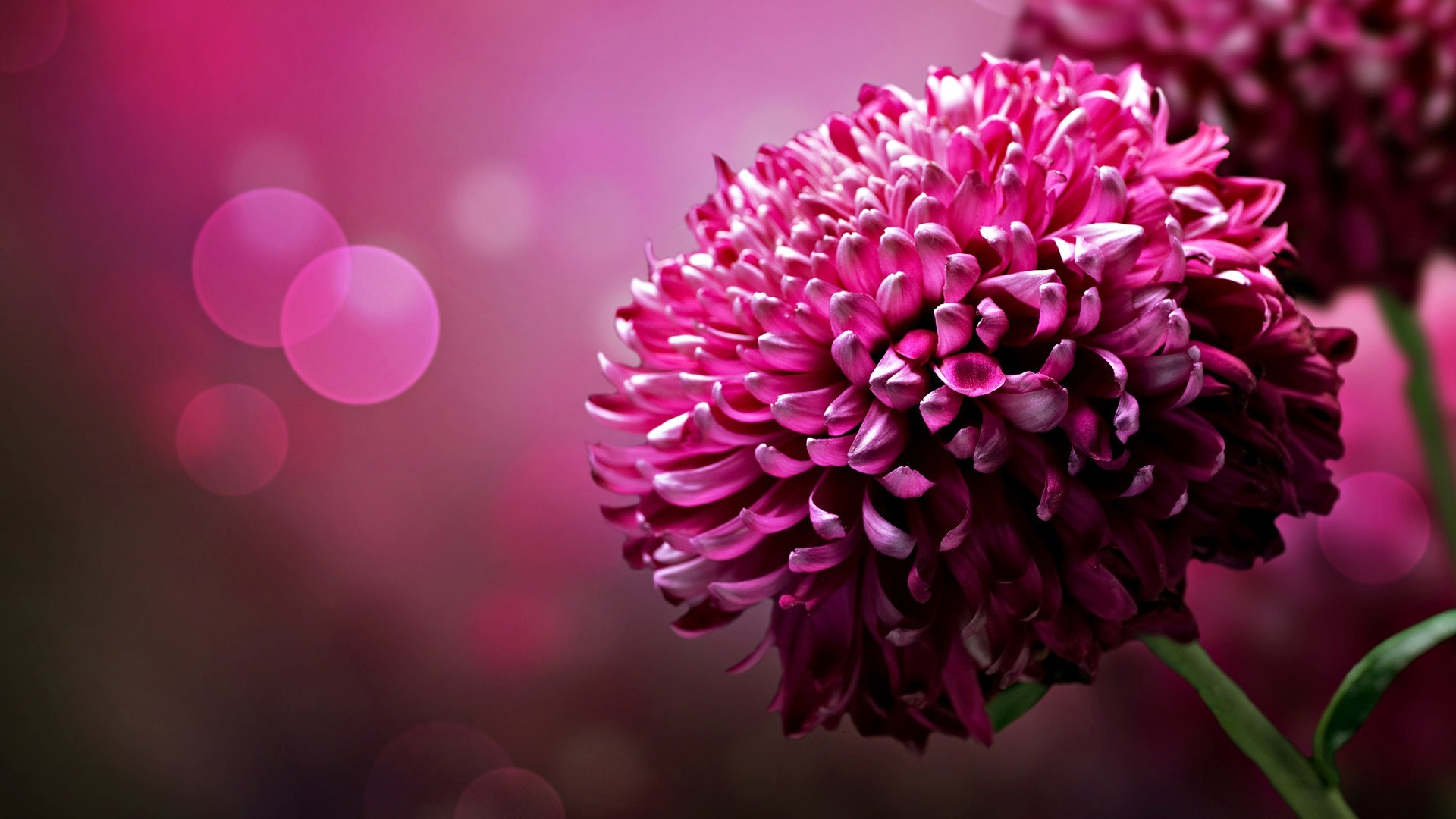 desktop-full-screen-floral-hd-1920x1080-wallpaper-wp3804484
