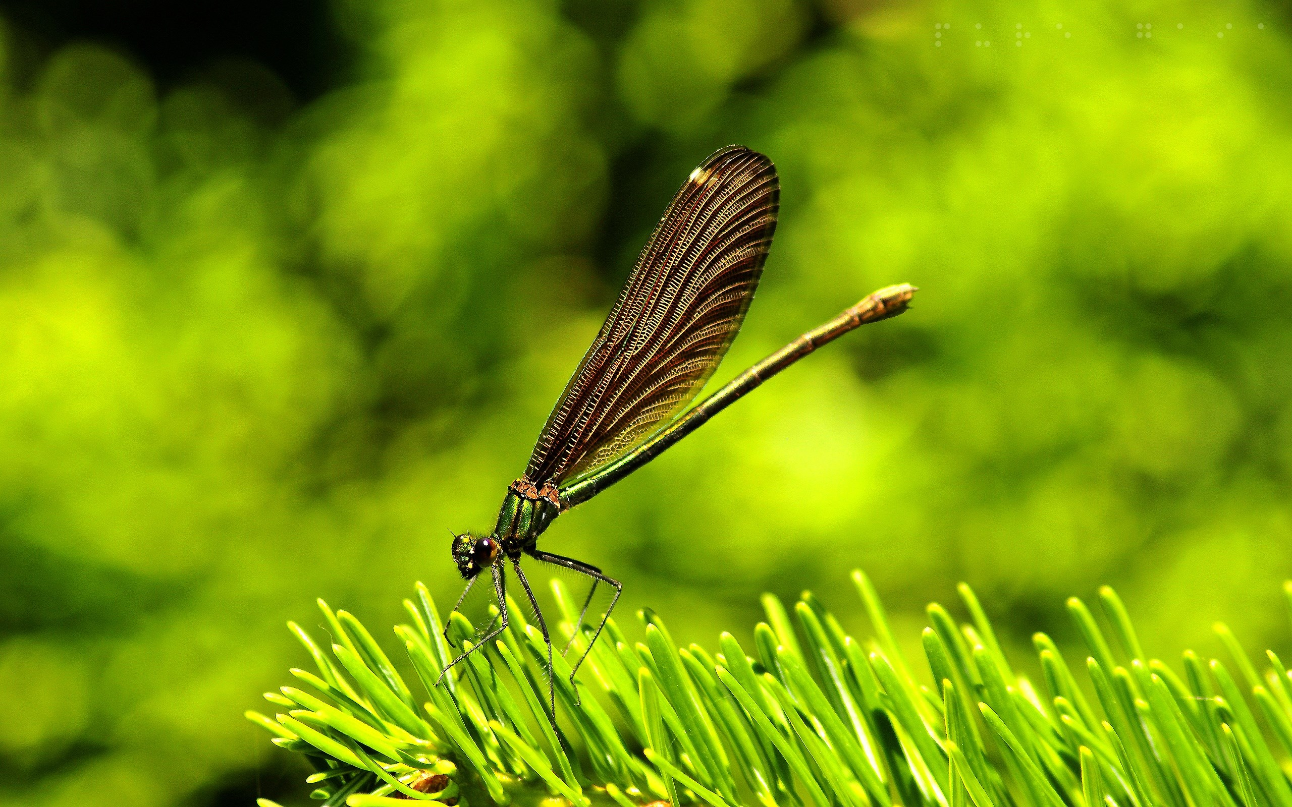 dragonfly-backround-1080p-windows-Dryden-Sinclair-x-wallpaper-wp3804895
